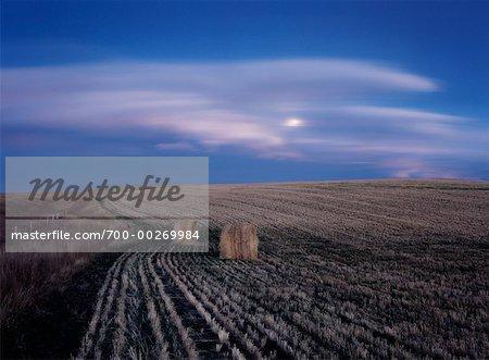 Lever de la lune au-dessus du champ Alberta Canada