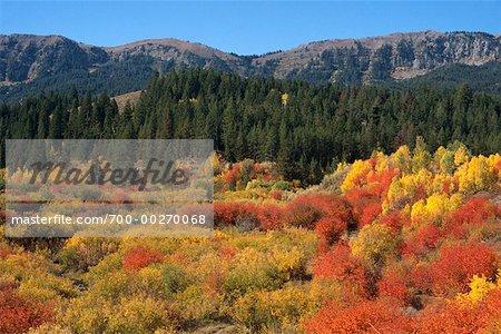 Mixte des forêts et des montagnes Grand Teton Idaho USA