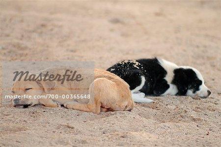 Chiens dormir sur la plage