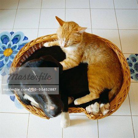Chat et chien couché dans le panier, Rome, Italie