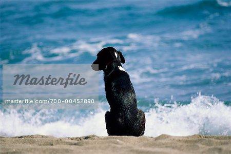 Chien assis sur la plage, la mer Méditerranée, Italie