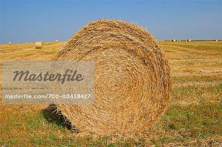 Bale of Straw in Wheat Field, Prince Edward Island, Canada
