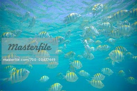 School of Fish, Bahamas, Caribbean