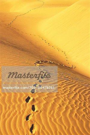 Empreintes de pas dans le désert