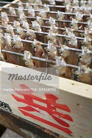 Poisson au marché aux poissons de Nijo, Sapporo, Hokkaido, Japon