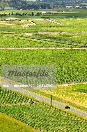Trinity Hill Vineyards, graviers Gimblett, Hastings, Bay, Nouvelle-Zélande Hawke