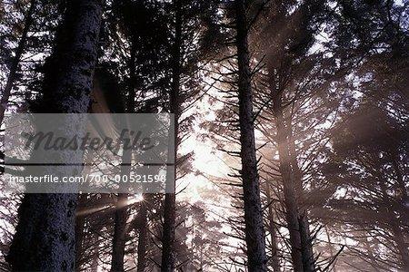 Les rayons du soleil à travers la forêt, Oregon, Etats-Unis