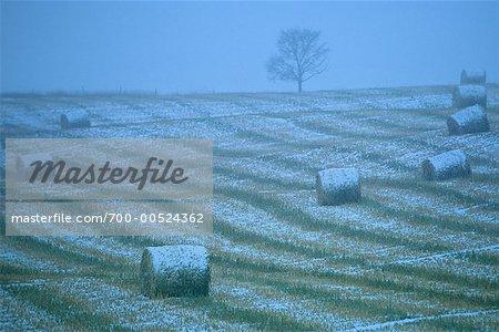 Balles de foin, couvertes de neige, près de Cochrane, Alberta, Canada
