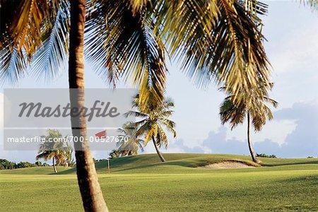 Parcours de golf, Saint-François, Grande-Terre, Guadeloupe, Antilles françaises