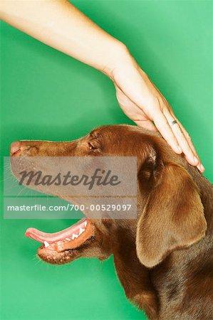 Femme caresser chien