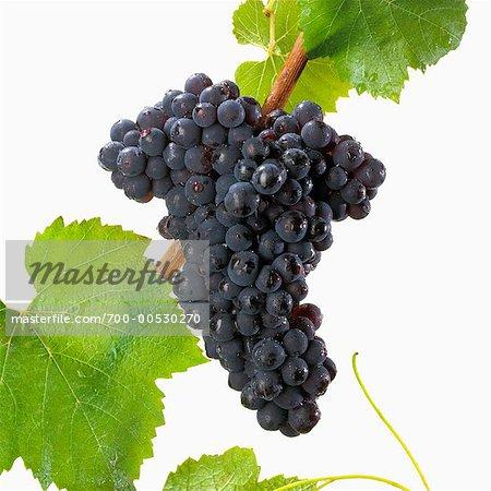 Raisins de Pinot Noire
