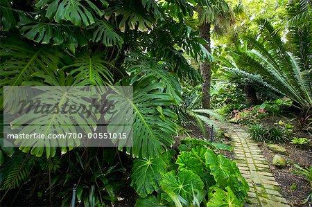 Monstera Deliciosa, Los Angeles County Arboretum und Botanischer Garten, Arcadia, Kalifornien, USA