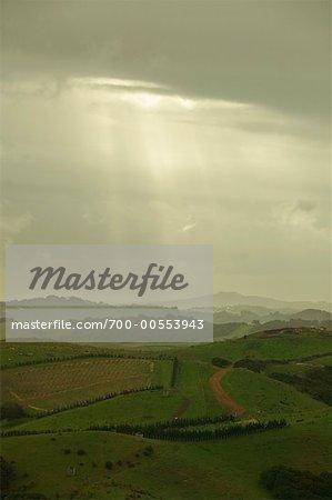 Farmland Seen From Stony Batter, Waiheke Island, New Zealand