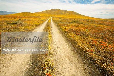 Chemins de roulement à Antelope Valley, California, USA
