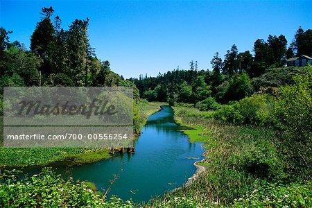 Vue sur rivière, Mendocino, en Californie, USA