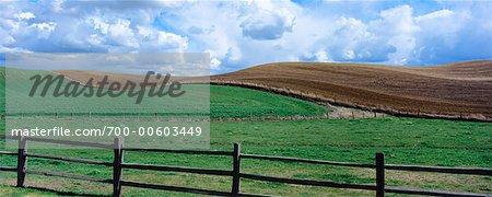 Champ de blé de printemps et sur le terrain en friche, Palouse, Washington, USA