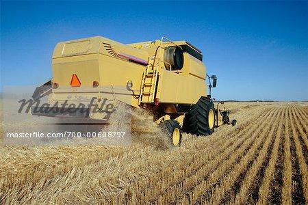 La récolte de blé, Shoal Lake, Manitoba, Canada