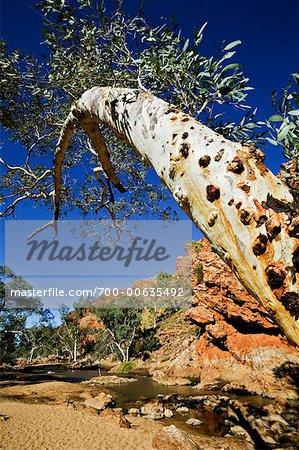 Ormiston Gorge dans les West MacDonnell Ranges, territoire du Nord, Australie