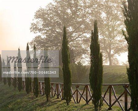 Tree-Lined Road, Umbria, Italy
