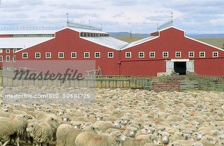 Ferme de Tierra del Fuego, Argentine
