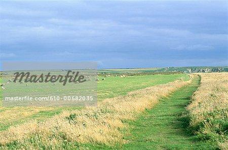 L'Angleterre, Cornwall, près de Newquay