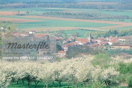 Arbres fleurissants-la mirabelle de Lorraine, France