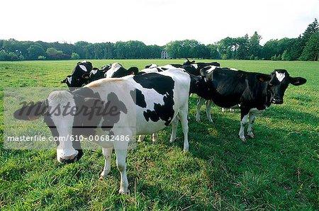 France, Centre, pasture