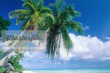 Archipel des Tuamotu, Polynésie Rangiroa.