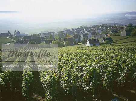 France, Champagne region, Hautvilliers, vineyard and village