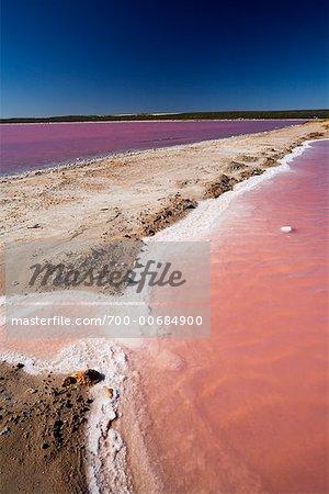 Pink Algae on Hutt Lagoon, Western Australia, Australia