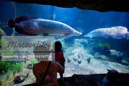 People Looking at Fish at Aquarium, Underwater World, Sentosa Island, Singapore