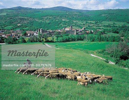 France, Aveyron, Hermelix, troupeau de moutons