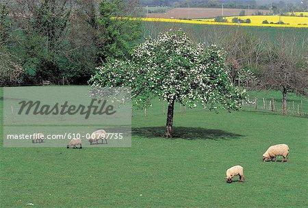 Paysage agricole Normandie, Perche, France