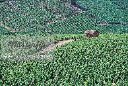 France, Bourgogne, Julianas, vignobles