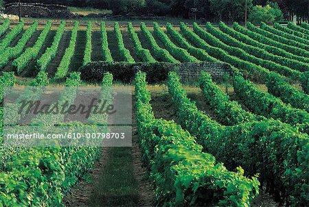 France, Centre, Beaumont en Veron, vineyard