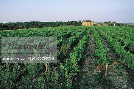 France, Centre, château de Luynes, vignoble