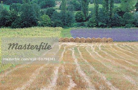 France, Lot, champs pendant la récolte