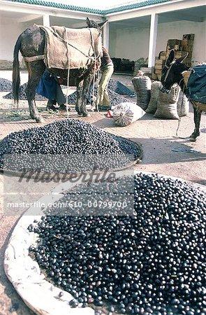 Morroco, Safi, olive market