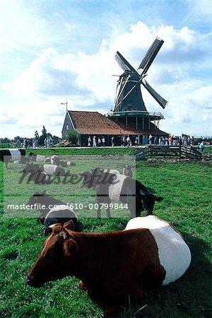 Pays-Bas, north Holland, Zaanstad, moulin à vent