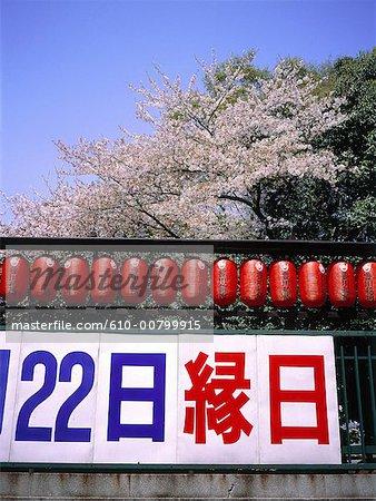 Japan, Kyoto, Shinto temple at spring