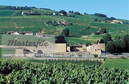 France, Beaujolais region, Julienas, vineyard