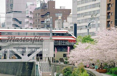 Japan, Tokyo, train passing near blossoming cherry tree