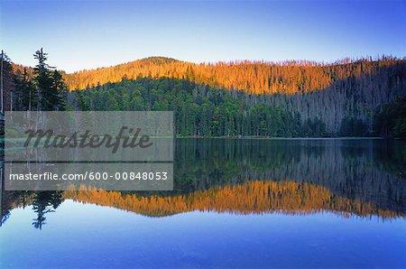 Bayerischer Wald National Park, Bavaria, Germany