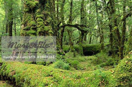 Lake Gunn Nature Walk, Fiordland National Park, South Island, New Zealand