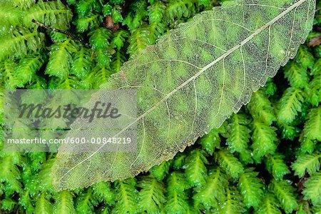 Gros plan des feuilles