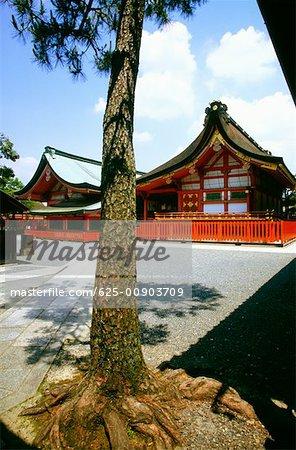 Tree in front of a temple, Fushimi-Inari Shrine, Kyoto, Japan