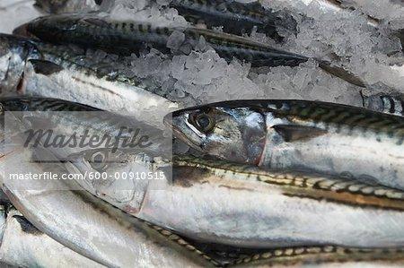 Cornish Mackerel, Borough Organic Market, London, England