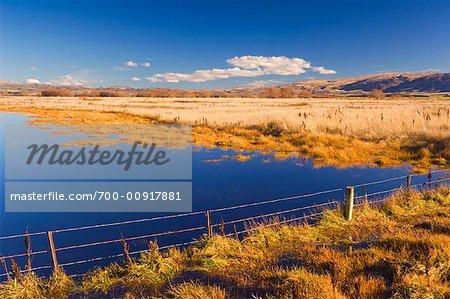 Farmland, Ranfurly, South Island, New Zealand