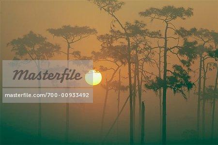 Sunrise through Trees, Osceola County, Florida, USA