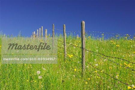 Meadow with Fence in Spring, Allgau, Bavaria, Germany